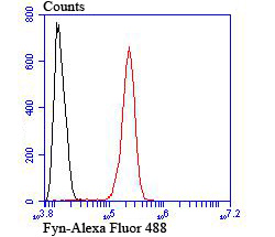 Flow cytometric analysis of SH-SY5Y cells with Fyn antibody at 1/100 dilution (red) compared with an unlabelled control (cells without incubation with primary antibody; black). Alexa Fluor 488-conjugated goat anti-rabbit IgG was used as the secondary antibody.