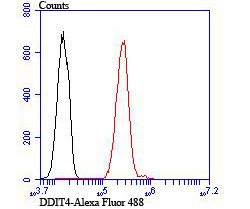 Flow cytometric analysis of A549 cells with DDIT4 antibody at 1/100 dilution (red) compared with an unlabelled control (cells without incubation with primary antibody; black).