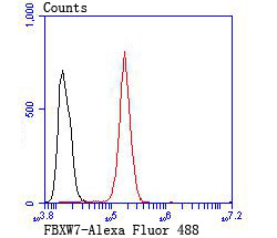 Flow cytometric analysis of SH-SY5Y cells with FBXW7 antibody at 1/100 dilution (red) compared with an unlabelled control (cells without incubation with primary antibody; black). Alexa Fluor 488-conjugated goat anti rabbit IgG was used as the secondary antibody.
