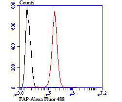 Flow cytometric analysis of SH-SY5Y cells with FAP antibody at 1/100 dilution (red) compared with an unlabelled control (cells without incubation with primary antibody; black). Alexa Fluor 488-conjugated goat anti rabbit IgG was used as the secondary antibody.