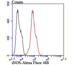 Flow cytometric analysis of LOVO cells with iNOS antibody at 1/100 dilution (red) compared with an unlabelled control (cells without incubation with primary antibody; black).