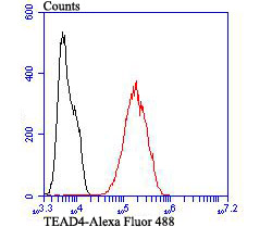 Flow cytometric analysis of LOVO cells with TEAD4 antibody at 1/100 dilution (red) compared with an unlabelled control (cells without incubation with primary antibody; black). Alexa Fluor 488-conjugated goat anti-rabbit IgG was used as the secondary antibody.