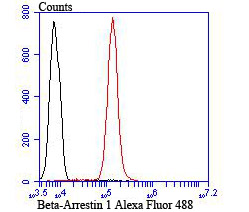 Flow cytometric analysis of Jurkat cells with beta Arrestin 1 antibody at 1/100 dilution (red) compared with an unlabelled control (cells without incubation with primary antibody; black). Alexa Fluor 488-conjugated goat anti-rabbit IgG was used as the secondary antibody.