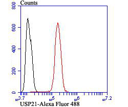 Flow cytometric analysis of SH-SY-5Y cells with USP21 antibody at 1/100 dilution (red) compared with an unlabelled control (cells without incubation with primary antibody; black). Alexa Fluor 488-conjugated goat anti-rabbit IgG was used as the secondary antibody.