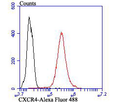 Flow cytometric analysis of THP-1 cells with CXCR4 antibody at 1/100 dilution (red) compared with an unlabelled control (cells without incubation with primary antibody; black). Alexa Fluor 488-conjugated goat anti-rabbit IgG was used as the secondary antibody.