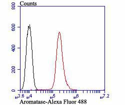 Flow cytometric analysis of HepG2 cells with Aromatase antibody at 1/100 dilution (red) compared with an unlabelled control (cells without incubation with primary antibody; black). Alexa Fluor 488-conjugated goat anti-rabbit IgG was used as the secondary antibody.