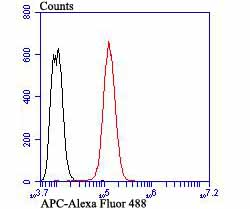 Flow cytometric analysis of SH-SY-5Y cells with APC antibody at 1/100 dilution (red) compared with an unlabelled control (cells without incubation with primary antibody; black). Alexa Fluor 488-conjugated goat anti-rabbit IgG was used as the secondary antibody.