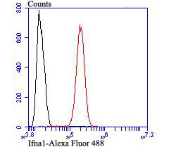 Flow cytometric analysis of SH-SY5Y cells with IFNA1 antibody at 1/100 dilution (red) compared with an unlabelled control (cells without incubation with primary antibody; black). Alexa Fluor 488-conjugated goat anti rabbit IgG was used as the secondary antibody.