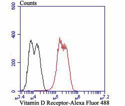 Flow cytometric analysis of LOVO cells with Vitamin D Receptor antibody at 1/100 dilution (red) compared with an unlabelled control (cells without incubation with primary antibody; black). Alexa Fluor 488-conjugated goat anti-rabbit IgG was used as the secondary antibody.