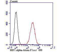 Flow cytometric analysis of HIF1 alpha was done on Siha cells. The cells were fixed, permeabilized and stained with the primary antibody (ER1802-41, 1/100) (red). After incubation of the primary antibody at room temperature for an hour, the cells were stained with a Alexa Fluor 488-conjugated goat anti-rabbit IgG Secondary antibody at 1/500 dilution for 30 minutes.Unlabelled sample was used as a control (cells without incubation with primary antibody; blcak).