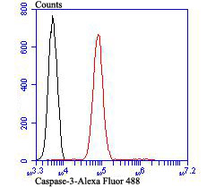 Flow cytometric analysis of Jurkat cells with Caspase-3 antibody at 1/100 dilution (red) compared with an unlabelled control (cells without incubation with primary antibody; black). Alexa Fluor 488-conjugated goat anti rabbit IgG was used as the secondary antibody.