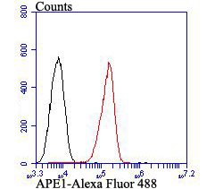 Flow cytometric analysis of A549 cells with APE1 antibody at 1/100 dilution (red) compared with an unlabelled control (cells without incubation with primary antibody; black). Alexa Fluor 488-conjugated goat anti-rabbit IgG was used as the secondary antibody.