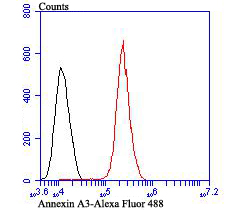 Flow cytometric analysis of A431 cells with Annexin A3 antibody at 1/100 dilution (red) compared with an unlabelled control (cells without incubation with primary antibody; black). Alexa Fluor 488-conjugated goat anti-rabbit IgG was used as the secondary antibody.
