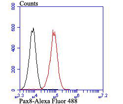 Flow cytometric analysis of SiHa cells with Pax8 antibody at 1/100 dilution (red) compared with an unlabelled control (cells without incubation with primary antibody; black). Alexa Fluor 488-conjugated goat anti-rabbit IgG was used as the secondary antibody.