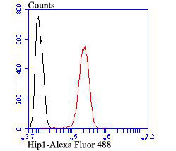 Flow cytometric analysis of SH-SY5Y cells with Hip1 antibody at 1/100 dilution (red) compared with an unlabelled control (cells without incubation with primary antibody; black). Alexa Fluor 488-conjugated goat anti-rabbit IgG was used as the secondary antibody.