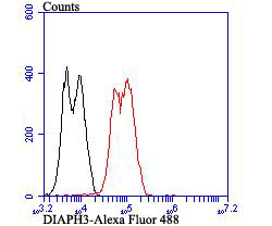Flow cytometric analysis of LOVO cells with DIAPH3 antibody at 1/100 dilution (red) compared with an unlabelled control (cells without incubation with primary antibody; black). Alexa Fluor 488-conjugated goat anti-rabbit IgG was used as the secondary antibody.