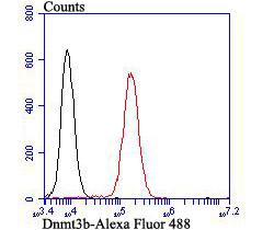 Flow cytometric analysis of K562 cells with Dnmt3b antibody at 1/100 dilution (red) compared with an unlabelled control (cells without incubation with primary antibody; black). Alexa Fluor 488-conjugated goat anti-rabbit IgG was used as the secondary antibody.