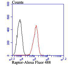 Flow cytometric analysis of A549 cells with Raptor antibody at 1/100 dilution (red) compared with an unlabelled control (cells without incubation with primary antibody; black). Alexa Fluor 488-conjugated goat anti-rabbit IgG was used as the secondary antibody.