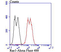 Flow cytometric analysis of LOVO cells with Rae1 antibody at 1/100 dilution (red) compared with an unlabelled control (cells without incubation with primary antibody; black). Alexa Fluor 488-conjugated goat anti-rabbit IgG was used as the secondary antibody.Flow cytometric analysis of LOVO cells with Rae1 antibody at 1/100 dilution (red) compared with an unlabelled control (cells without incubation with primary antibody; black). Alexa Fluor 488-conjugated goat anti-rabbit IgG was used as the secondary antibody.