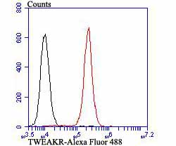 Flow cytometric analysis of 293T cells with TWEAKR antibody at 1/100 dilution (red) compared with an unlabelled control (cells without incubation with primary antibody; black). Alexa Fluor 488-conjugated goat anti-rabbit IgG was used as the secondary antibody.