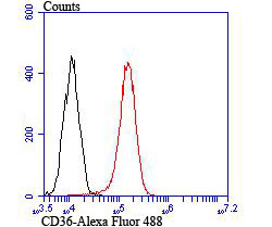 Flow cytometric analysis of THP-1 cells with CD36 antibody at 1/100 dilution (red) compared with an unlabelled control (cells without incubation with primary antibody; black).