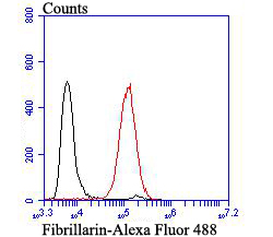 Flow cytometric analysis of HL-60 cells with Fibrillarin antibody at 1/100 dilution (red) compared with an unlabelled control (cells without incubation with primary antibody; black). Alexa Fluor 488-conjugated goat anti-rabbit IgG was used as the secondary antibody.