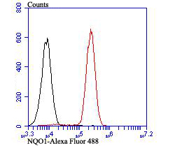 Flow cytometric analysis of Siha cells with NQO1 antibody at 1/100 dilution (red) compared with an unlabelled control (cells without incubation with primary antibody; black). Alexa Fluor 488-conjugated goat anti-rabbit IgG was used as the secondary antibody.