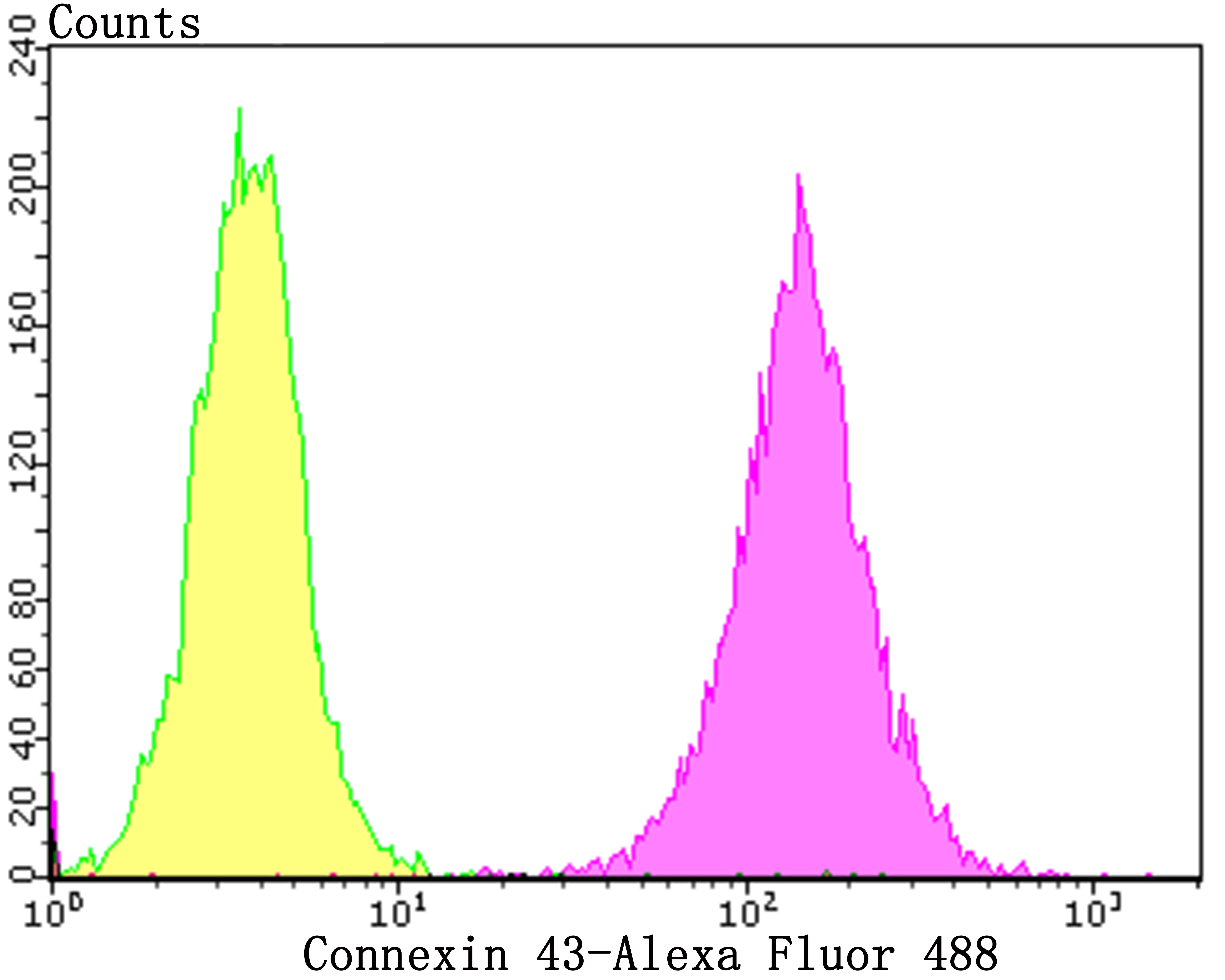 Flow cytometric analysis of SH-SY-5Y cells with Connexin 43 antibody at 1/50 dilution (purple) compared with an unlabelled control (cells without incubation with primary antibody; yellow). Alexa Fluor 488-conjugated goat anti-rabbit IgG was used as the secondary antibody.