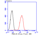 Flow cytometric analysis of A549 cells with FBXL18 antibody at 1/100 dilution (red) compared with an unlabelled control (cells without incubation with primary antibody; black). Alexa Fluor 488-conjugated goat anti-rabbit IgG was used as the secondary antibody.