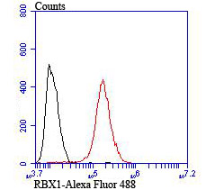 Flow cytometric analysis of MCF-7 cells with RBX1 antibody at 1/100 dilution (red) compared with an unlabelled control (cells without incubation with primary antibody; black). Alexa Fluor 488-conjugated goat anti-rabbit IgG was used as the secondary antibody.