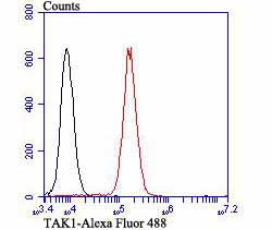 Flow cytometric analysis of K562 cells with TAK1 antibody at 1/100 dilution (red) compared with an unlabelled control (cells without incubation with primary antibody; black). Alexa Fluor 488-conjugated goat anti-rabbit IgG was used as the secondary antibody.