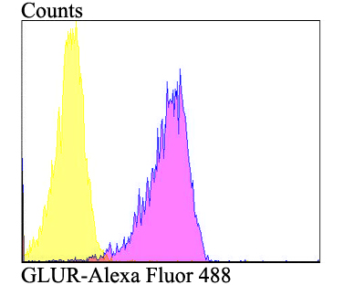 Flow cytometric analysis of A549 cells with GLUR antibody at 1/100 dilution (purple) compared with an unlabelled control (cells without incubation with primary antibody; yellow). Alexa Fluor 488-conjugated goat anti-rabbit IgG was used as the secondary antibody.
