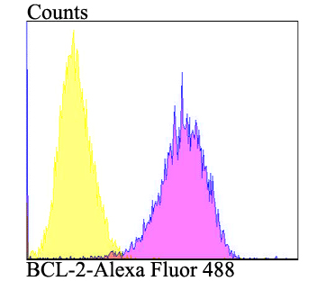 Flow cytometric analysis of MCF-7 cells with Bcl2 antibody at 1/100 dilution (purple) compared with an unlabelled control (cells without incubation with primary antibody; yellow). Alexa Fluor 488-conjugated goat anti-rabbit IgG was used as the secondary antibody.