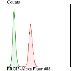 Flow cytometric analysis of LOVO cells with ERGI3 antibody at 1/100 dilution (red) compared with an unlabelled control (cells without incubation with primary antibody; green). Alexa Fluor 488-conjugated goat anti-rabbit IgG was used as the secondary antibody.