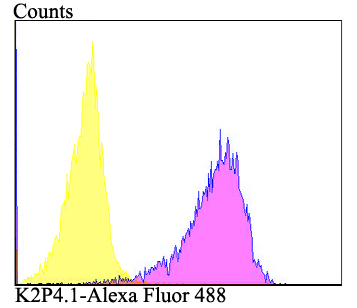 Flow cytometric analysis of HepG2 cells with K2P4.1 antibody at 1/100 dilution (purple) compared with an unlabelled control (cells without incubation with primary antibody; yellow). Alexa Fluor 488-conjugated goat anti-rabbit IgG was used as the secondary antibody.