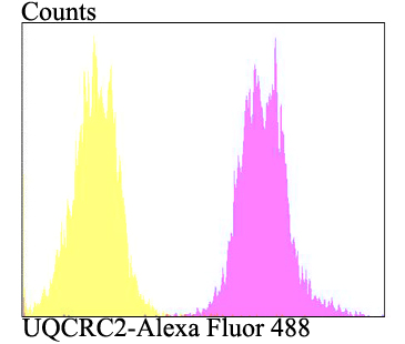 Flow cytometric analysis of HepG2 cells with UQCRC2 antibody at 1/100 dilution (fuchsia) compared with an unlabelled control (cells without incubation with primary antibody; yellow). Alexa Fluor 488-conjugated goat anti-rabbit IgG was used as the secondary antibody.