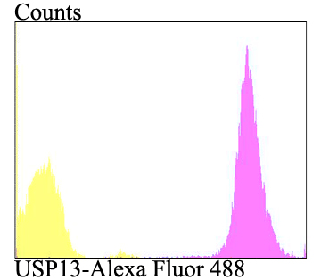 Flow cytometric analysis of A431 cells with USP13 antibody at 1/100 dilution (purple) compared with an unlabelled control (cells without incubation with primary antibody; yellow). Alexa Fluor 488-conjugated goat anti-rabbit IgG was used as the secondary antibody.