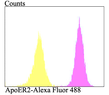 Flow cytometric analysis of SH-SY-5Y cells with ApoER2 antibody at 1/100 dilution (purple) compared with an unlabelled control (cells without incubation with primary antibody; yellow). Alexa Fluor 488-conjugated goat anti-rabbit IgG was used as the secondary antibody.