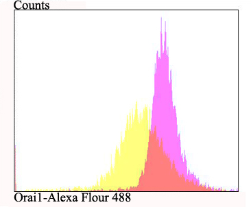 Flow cytometric analysis of MCF-7 cells with Orai1 antibody at 1/100 dilution (fuchsia) compared with an unlabelled control (cells without incubation with primary antibody; yellow). Alexa Fluor 488-conjugated goat anti-rabbit IgG was used as the secondary antibody.