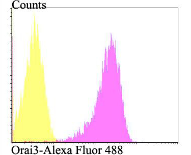 Flow cytometric analysis of A549 cells with Orai3 antibody at 1/100 dilution (fuchsia) compared with an unlabelled control (cells without incubation with primary antibody; yellow). Alexa Fluor 488-conjugated goat anti-rabbit IgG was used as the secondary antibody.