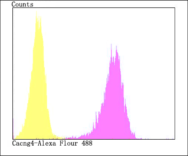 Flow cytometric analysis of SH-SY5Y cells with Cacng4 antibody at 1/100 dilution (fuchsia) compared with an unlabelled control (cells without incubation with primary antibody; yellow). Alexa Fluor 488-conjugated goat anti-rabbit IgG was used as the secondary antibody.