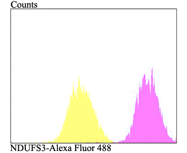 Flow cytometric analysis of MCF-7 cells with NDUFS3 antibody at 1/100 dilution (fuchsia) compared with an unlabelled control (cells without incubation with primary antibody; yellow). Alexa Fluor 488-conjugated goat anti-rabbit IgG was used as the secondary antibody.