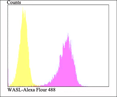 Flow cytometric analysis of SH-SY5Y cells with WASL antibody at 1/100 dilution (fuchsia) compared with an unlabelled control (cells without incubation with primary antibody; yellow). Alexa Fluor 488-conjugated goat anti-rabbit IgG was used as the secondary antibody.