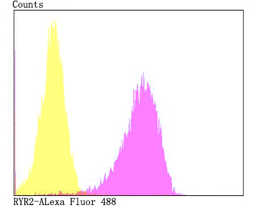 Flow cytometric analysis of 293T cells with RYR2 antibody at 1/100 dilution (fuchsia) compared with an unlabelled control (cells without incubation with primary antibody; yellow). Alexa Fluor 488-conjugated goat anti-rabbit IgG was used as the secondary antibody.