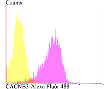 Flow cytometric analysis of SKOV-3 cells with CACNB3 antibody at 1/100 dilution (fuchsia) compared with an unlabelled control (cells without incubation with primary antibody; yellow). Alexa Fluor 488-conjugated goat anti-rabbit IgG was used as the secondary antibody.