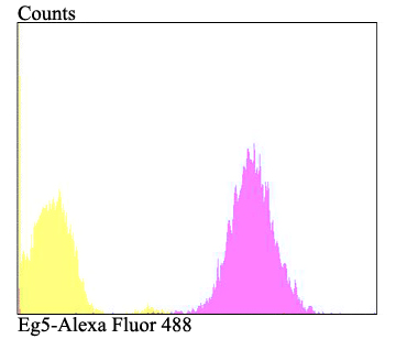 Flow cytometric analysis of A431 cells with Eg5 antibody at 1/100 dilution (fuchsia) compared with an unlabelled control (cells without incubation with primary antibody; yellow). Alexa Fluor 488-conjugated goat anti-rabbit IgG was used as the secondary antibody.