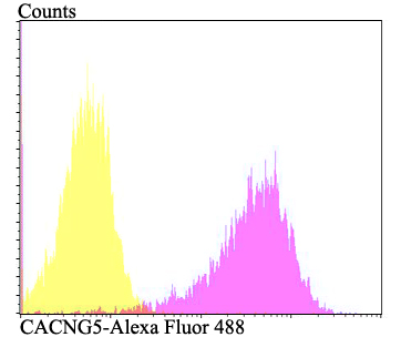 Flow cytometric analysis of PANC-1 cells with CACNG5 antibody at 1/100 dilution (fuchsia) compared with an unlabelled control (cells without incubation with primary antibody; yellow). Alexa Fluor 488-conjugated goat anti-rabbit IgG was used as the secondary antibody.