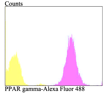 Flow cytometric analysis of A431 cells with PPAR gamma antibody at 1/100 dilution (purple) compared with an unlabelled control (cells without incubation with primary antibody; yellow). Alexa Fluor 488-conjugated goat anti-rabbit IgG was used as the secondary antibody.