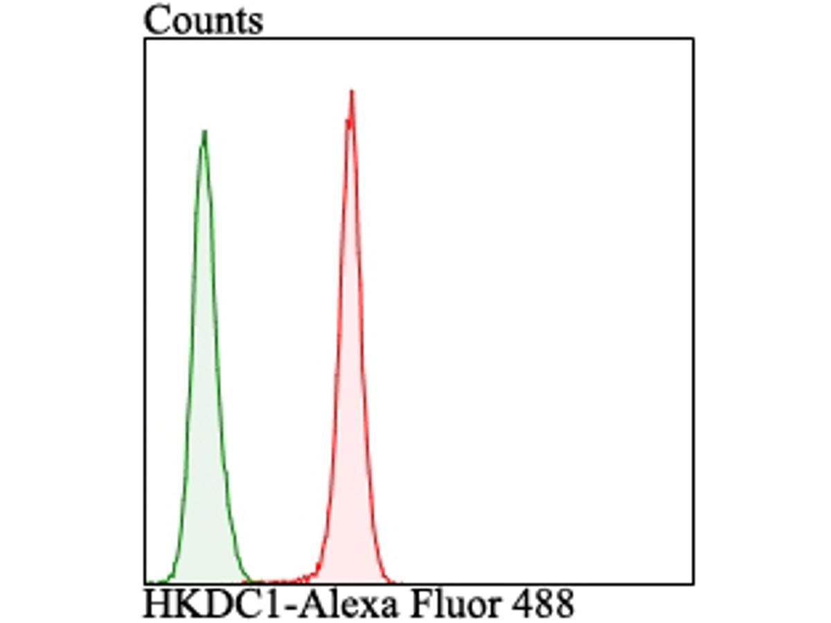 Flow cytometric analysis of LOVO cells with HKDC1 antibody at 1/100 dilution (red) compared with an unlabelled control (cells without incubation with primary antibody; green). Alexa Fluor 488-conjugated goat anti-rabbit IgG was used as the secondary antibody.