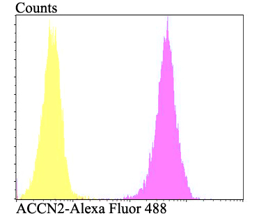 Flow cytometric analysis of SH-SY-5Y cells with ACCN2 antibody at 1/100 dilution (fuchsia) compared with an unlabelled control (cells without incubation with primary antibody; yellow). Alexa Fluor 488-conjugated goat anti-rabbit IgG was used as the secondary antibody.